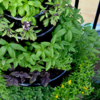 products grow organic herbs